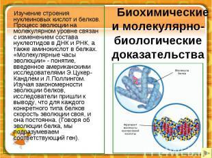 Биохимические и молекулярно-биологические доказательства Изучение строения нукле