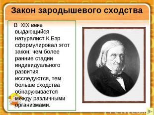 Закон зародышевого сходства В XIX веке выдающийся натуралист К.Бэр сформулировал