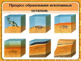 Процесс образования ископаемых остатков.