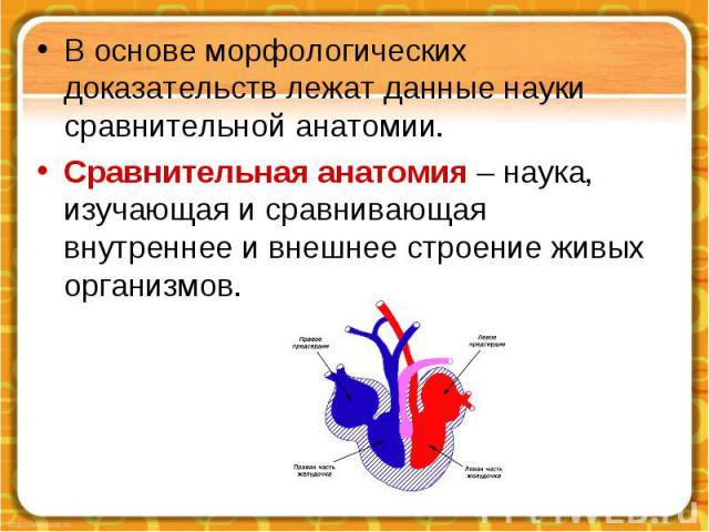 В основе морфологических доказательств лежат данные науки сравнительной анатомии. Сравнительная анатомия – наука, изучающая и сравнивающая внутреннее и внешнее строение живых организмов.
