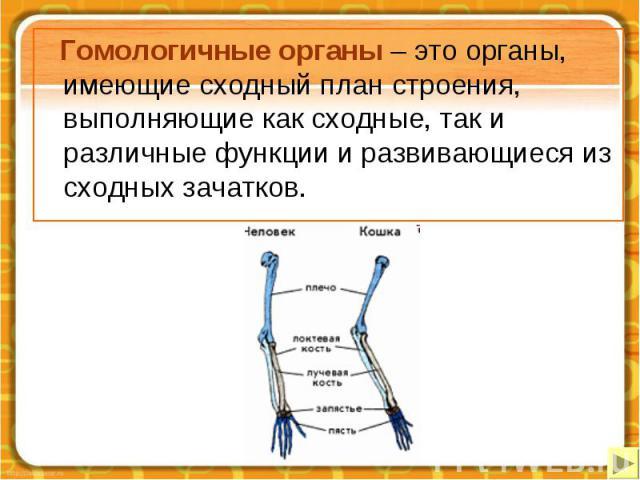 Гомологичные органы – это органы, имеющие сходный план строения, выполняющие как сходные, так и различные функции и развивающиеся из сходных зачатков. Гомологичные органы – это органы, имеющие сходный план строения, выполняющие как сходные, так и ра…