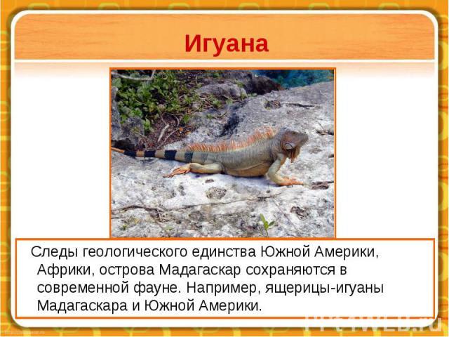 Игуана Следы геологического единства Южной Америки, Африки, острова Мадагаскар сохраняются в современной фауне. Например, ящерицы-игуаны Мадагаскара и Южной Америки.