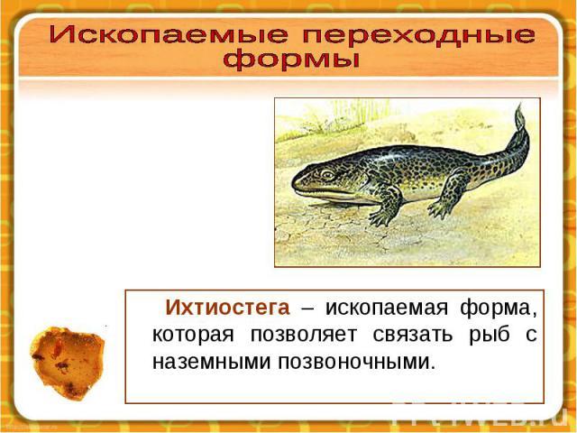 Ихтиостега – ископаемая форма, которая позволяет связать рыб с наземными позвоночными. Ихтиостега – ископаемая форма, которая позволяет связать рыб с наземными позвоночными.