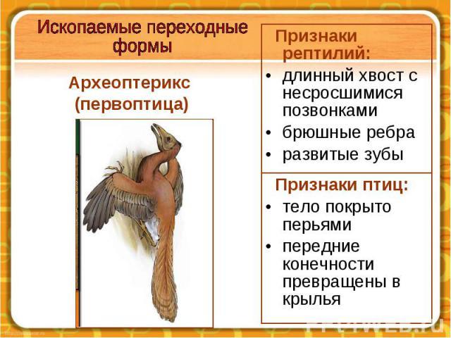 Археоптерикс (первоптица)