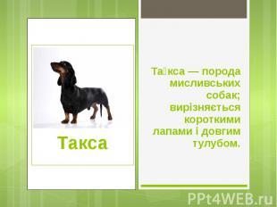Та кса — порода мисливських собак; вирізняється короткими лапами і довгим тулубо