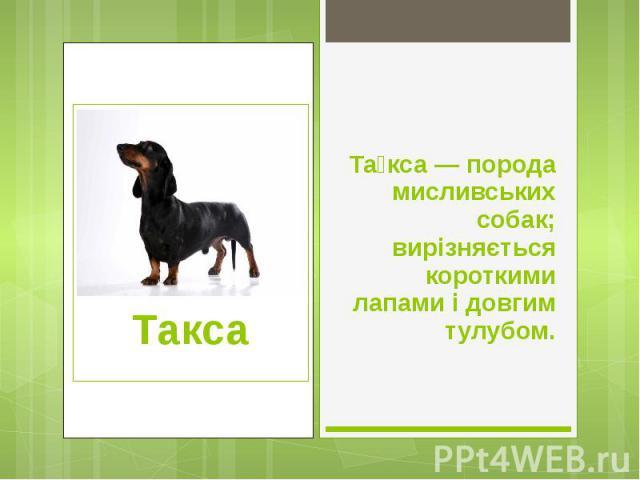 Та кса — порода мисливських собак; вирізняється короткими лапами і довгим тулубом. Та кса — порода мисливських собак; вирізняється короткими лапами і довгим тулубом.