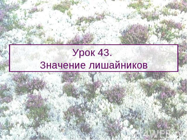 Урок 43. Значение лишайников