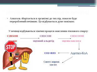 Метаболізм алкоголю в печінці Алкоголь зберігається в організмі до тих пір, поки