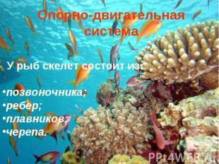 Опорно-двигательная система У рыб скелет состоит из: позвоночника; ребер; плавни