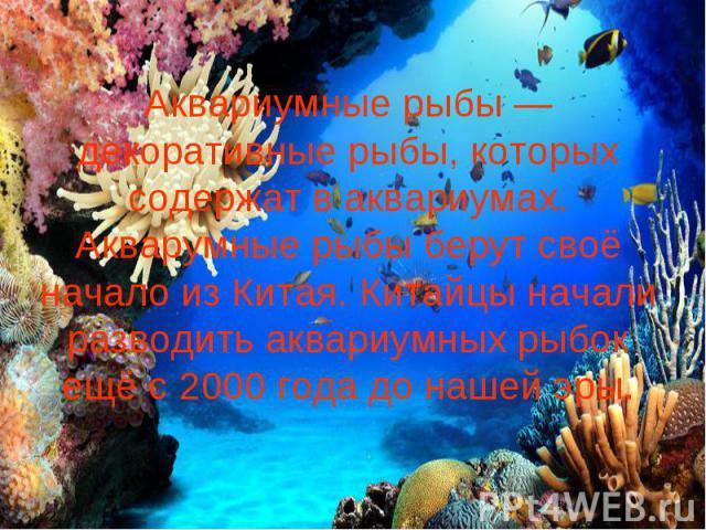 Аквариумные рыбы — декоративные рыбы, которых содержат в аквариумах. Акварумные рыбы берут своё начало из Китая. Китайцы начали разводить аквариумных рыбок ещё с 2000 года до нашей эры.