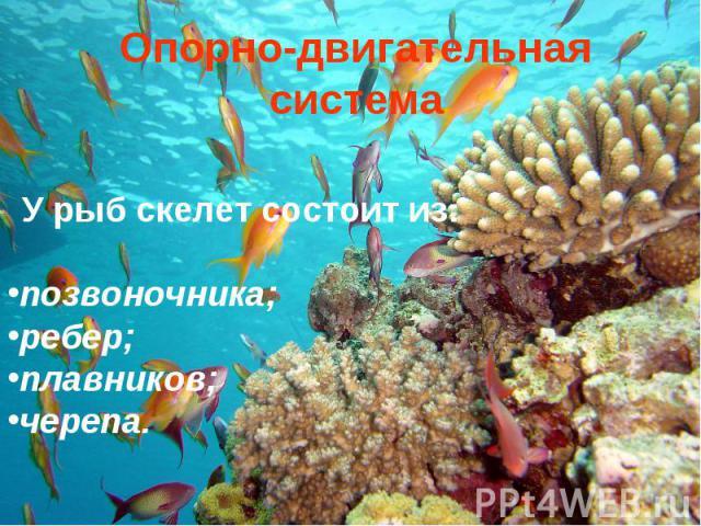 Опорно-двигательная система У рыб скелет состоит из: позвоночника; ребер; плавников; черепа.