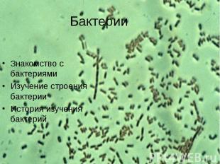 Знакомство с бактериями Знакомство с бактериями Изучение строения бактерии Истор