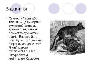 Відкриття Сумчастий вовк або тілацин – це вимерлий сумчастий ссавець, єдиний пре