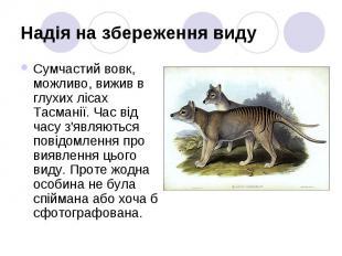 Надія на збереження виду Сумчастий вовк, можливо, вижив в глухих лісах Тасманії.