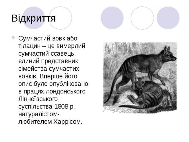 Відкриття Сумчастий вовк або тілацин – це вимерлий сумчастий ссавець, єдиний представник сімейства сумчастих вовків. Вперше його опис було опубліковано в працях лондонського Ліннеївського суспільства 1808 р. натуралістом-любителем Харрісом.