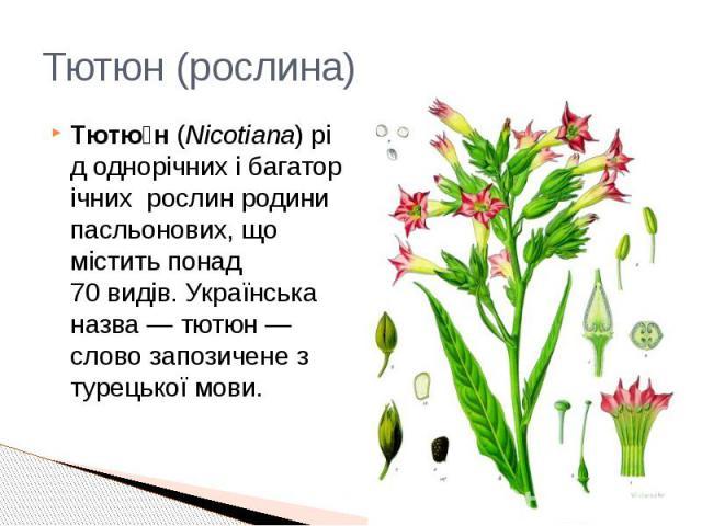 Тютюн (рослина) Тютю н(Nicotiana)рідоднорічнихібагаторічних_рослинродинипасльонових, що містить понад 70видів. Українська назва— тютюн— слово запозичене з турецької мови.