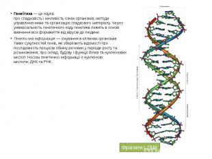 Гене тика— це наука проспадковістьімінливістьознак