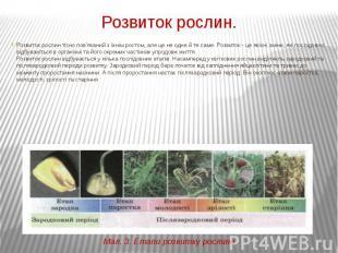 Розвиток рослин. Розвиток рослин тісно пов'язаний з їхнім ростом, але це не одне