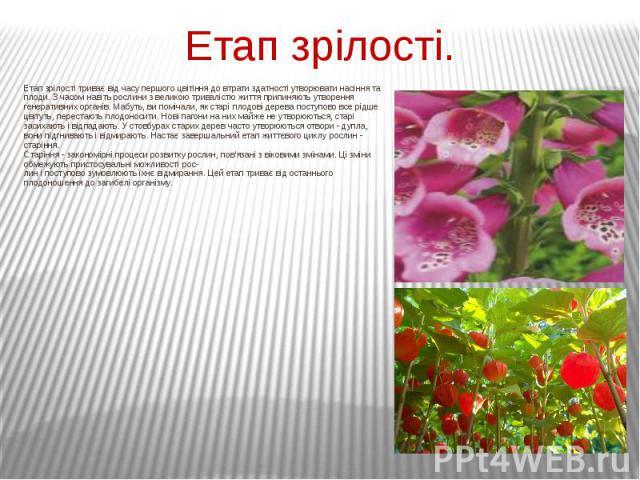 Етап зрілості. Етап зрілості триває від часу першого цвітіння до втрати здатності утворювати насіння та плоди. З часом навіть рослини з великою тривалістю життя припиняють утворення генеративних органів. Мабуть, ви помічали, як старі плодові дерева …