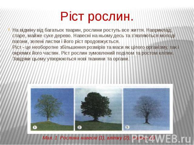 Ріст рослин. На відміну від багатьох тварин, рослини ростуть все життя. Наприклад, старе, майже сухе дерево. Навесні на ньому десь та з'являються молоді пагони, зелені листки і його ріст продовжується. Ріст - це необоротне збільшення розмірів та мас…