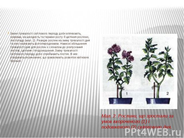 Зміни тривалості світлового періоду доби впливають, зокрема, на швидкість та терміни росту й цвітіння рослини, листопаду (мал. 2). Реакцію рослин на зміну тривалості дня та ночі називають фотоперіодизмом. Навесні збільшення тривалості дня для рослин…