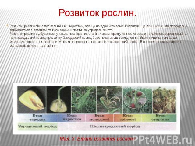 Розвиток рослин. Розвиток рослин тісно пов'язаний з їхнім ростом, але це не одне й те саме. Розвиток - це якісні зміни, які послідовно відбуваються в організмі та його окремих частинах упродовж життя. Розвиток рослин відбувається у кілька послідовни…