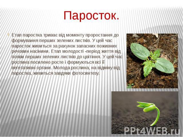 Паросток. Етап паростка триває від моменту проростання до формування перших зелених листків. У цей час паросток живиться за рахунок запасних поживних речовин насінини. Етап молодості -період життя від появи перших зелених листків до цвітіння. У цей …