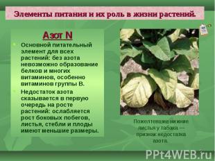 Азот N Азот N Основной питательный элемент для всех растений: без азота невозмож