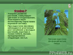 Фосфор Р Фосфор Р Ускоряет развитие растений, стимулирует цветение и плодоношени