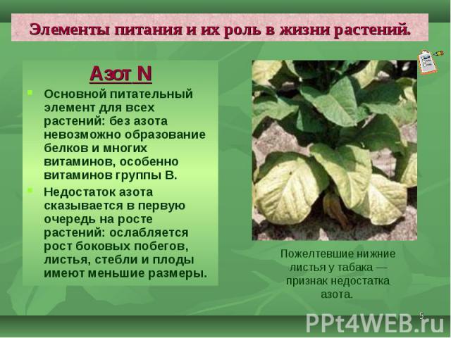 Азот N Азот N Основной питательный элемент для всех растений: без азота невозможно образование белков и многих витаминов, особенно витаминов группы В. Недостаток азота сказывается в первую очередь на росте растений: ослабляется рост боковых побегов,…