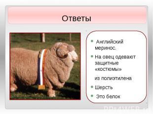 Ответы Английский меринос. На овец одевают защитные «костюмы» из полиэтилена Шер