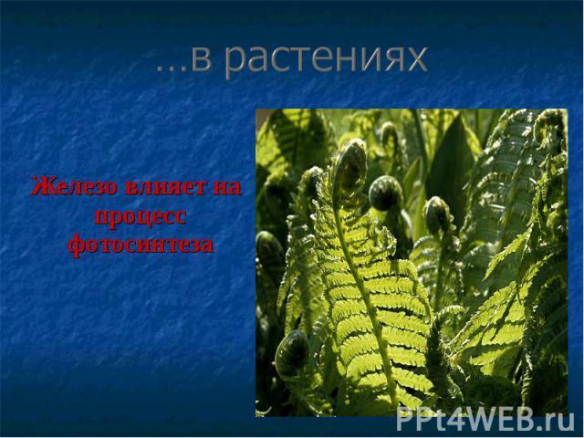 Железо влияет на процесс фотосинтеза Железо влияет на процесс фотосинтеза