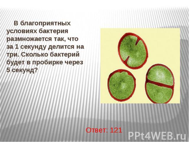 В благоприятных условиях бактерия размножается так, что за 1 секунду делится на три. Сколько бактерий будет в пробирке через 5 секунд? В благоприятных условиях бактерия размножается так, что за 1 секунду делится на три. Сколько бактерий будет в проб…