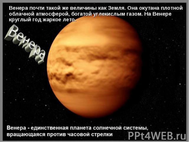 Венера почти такой же величины как Земля. Она окутана плотной облачной атмосферой, богатой углекислым газом. На Венере круглый год жаркое лето. Венера почти такой же величины как Земля. Она окутана плотной облачной атмосферой, богатой углекислым газ…