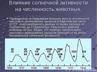 Проводились исследования больших волн в численности массового размножения грызун