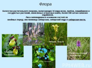 Богатство растительного покрова, включающее 34 вида мхов, грибов, лишайников и с