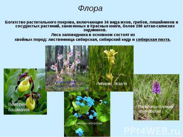 Богатство растительного покрова, включающее 34 вида мхов, грибов, лишайников и сосудистых растений, занесенных в Красные книги, более 200 алтае-саянских эндемиков. Богатство растительного покрова, включающее 34 вида мхов, грибов, лишайников и сосуди…