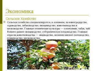 Сельское хозяйствоспециализируется, в основном, на виноградарстве, садовод
