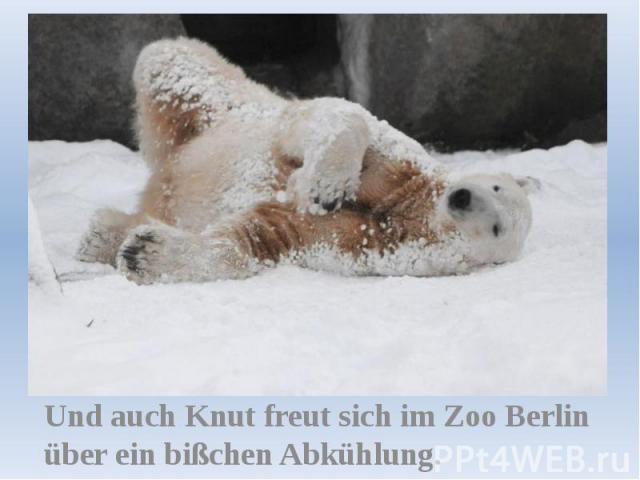 Und auch Knut freut sich im Zoo Berlin über ein bißchen Abkühlung.
