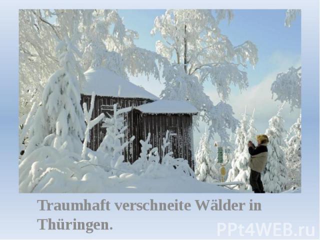 Traumhaft verschneite Wälder in Thüringen.