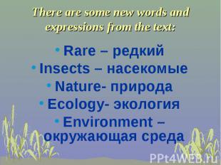 Rare – редкий Insects – насекомые Nature- природа Ecology- экология Environment