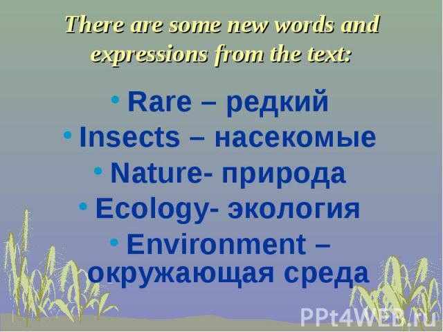 Rare – редкий Insects – насекомые Nature- природа Ecology- экология Environment – окружающая среда