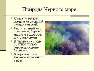 Природа Черного моря Климат – мягкий средиземноморский субтропический. Раститель