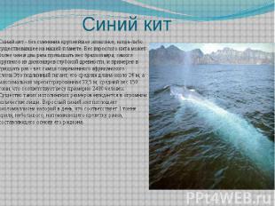 Синий кит Синий кит - без сомнения крупнейшее животное, когда-либо существовавше