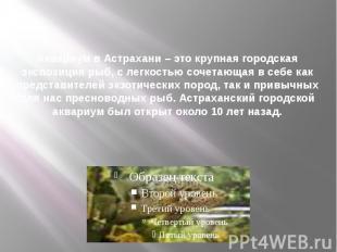 Аквариум в Астрахани – это крупная городская экспозиция рыб, с легкостью сочетаю