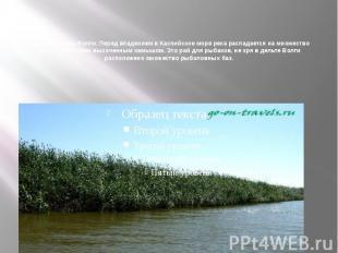 Фото из дельты Волги. Перед впадением в Каспийское море река распадается на множ