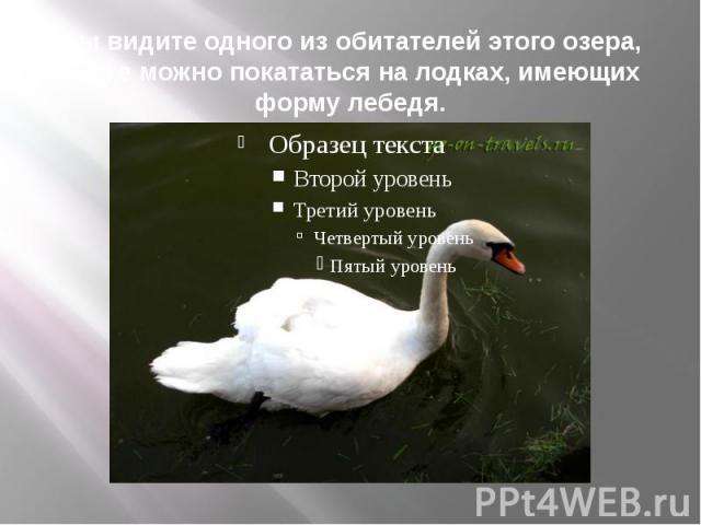 Вы видите одного из обитателей этого озера, также можно покататься на лодках, имеющих форму лебедя.