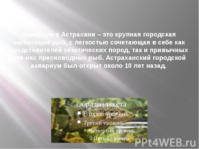 Аквариум в Астрахани – это крупная городская экспозиция рыб, с легкостью сочетающая в себе как представителей экзотических пород, так и привычных для нас пресноводных рыб. Астраханский городской аквариум был открыт около 10 лет назад.