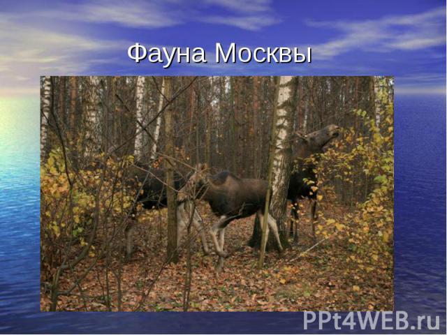 Фауна Москвы