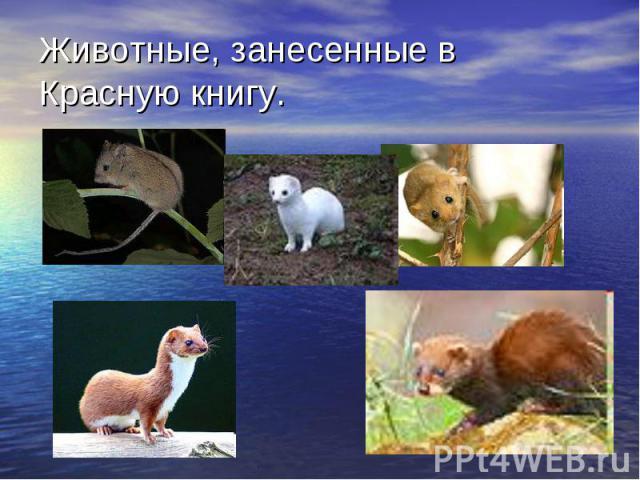 Животные, занесенные в Красную книгу.